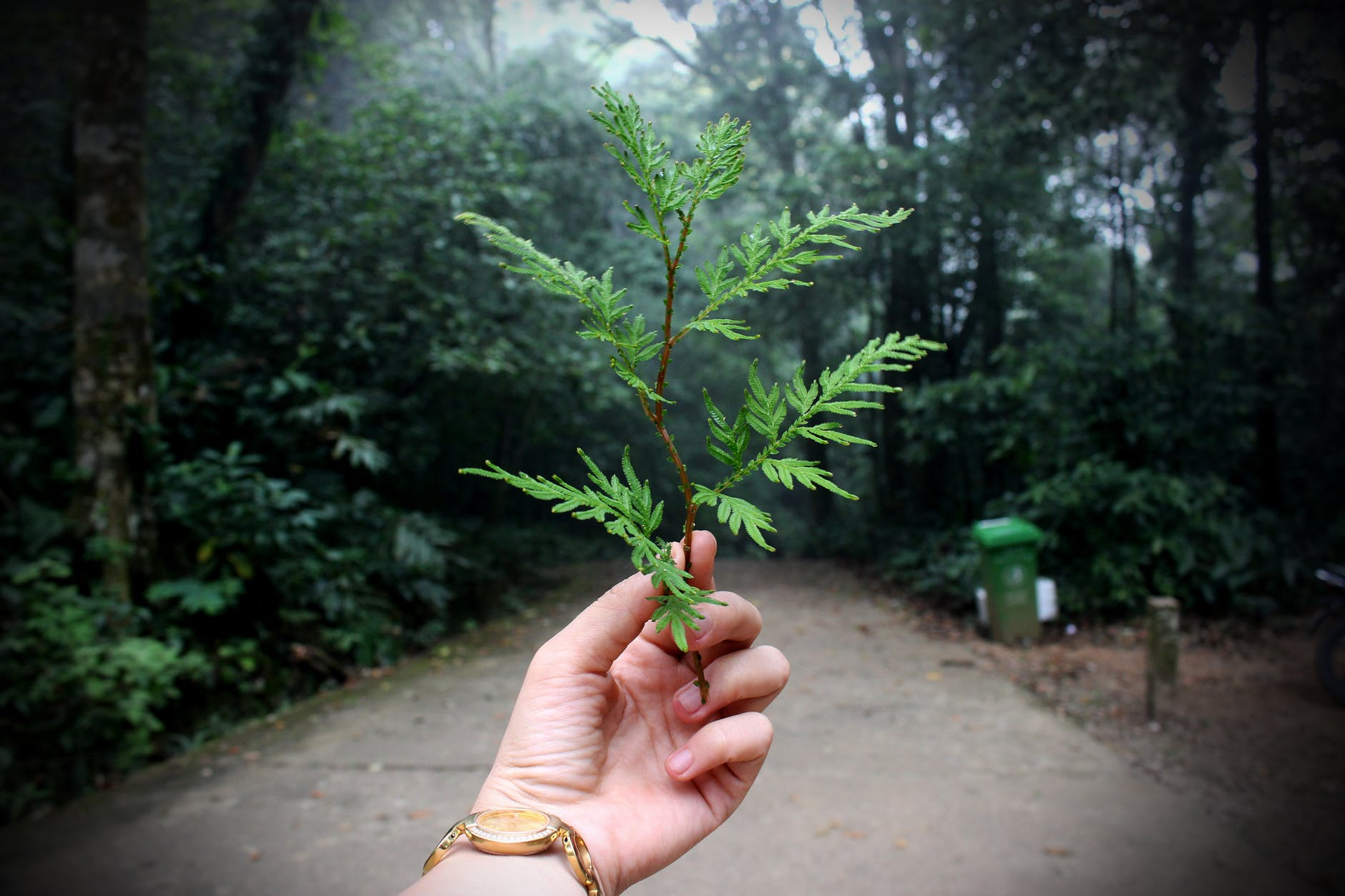 voluntariat pentru tineri tep eco