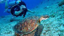 travel club lumea subacvatica fotografie