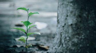 webinare pe subiecte ecologice
