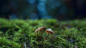 concurs de fotografie natura