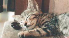 atelier de discuții despre calitatea somnului
