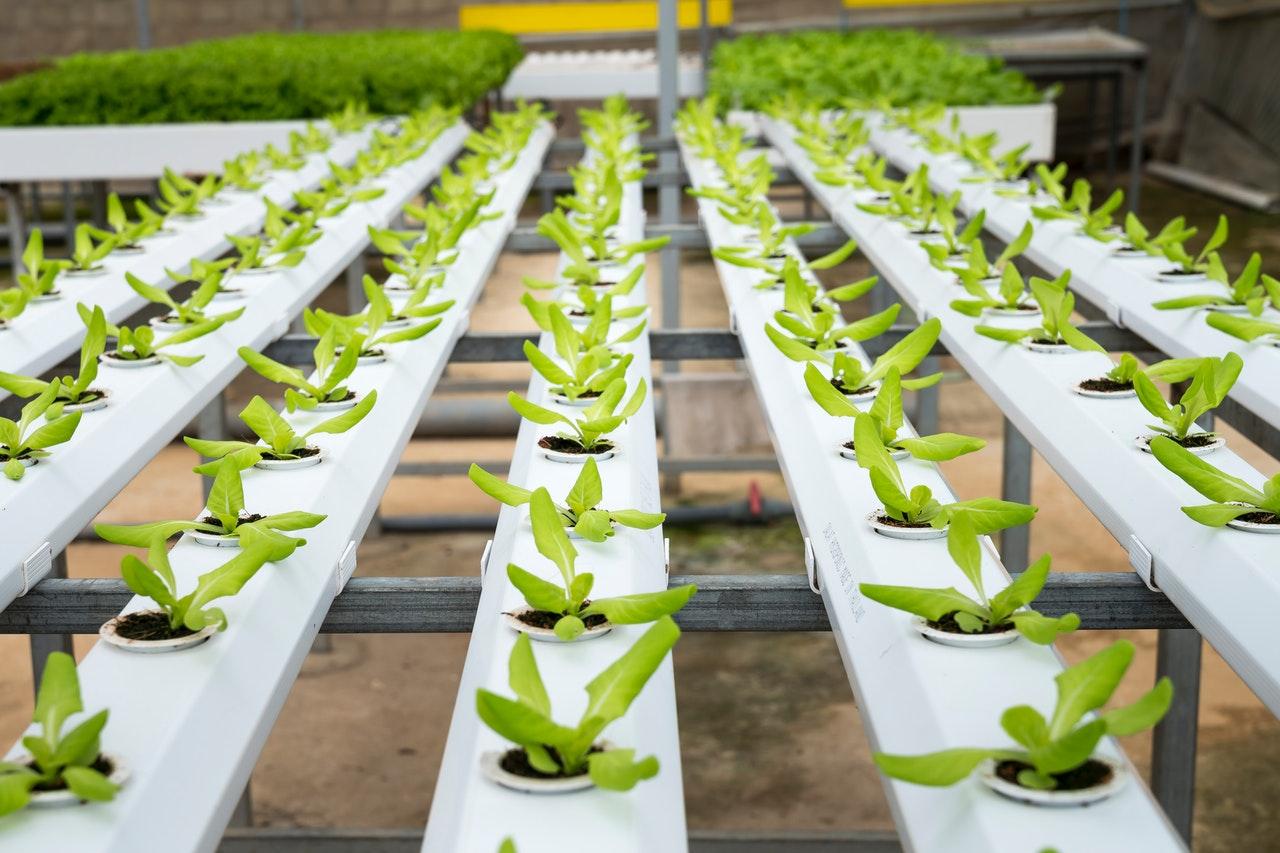 instruiri în domeniul agriculturii ecologice