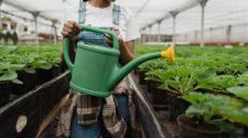 instruiri gratuite despre afaceri ecologice