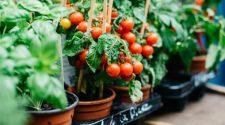 grădinărit ghid reguli