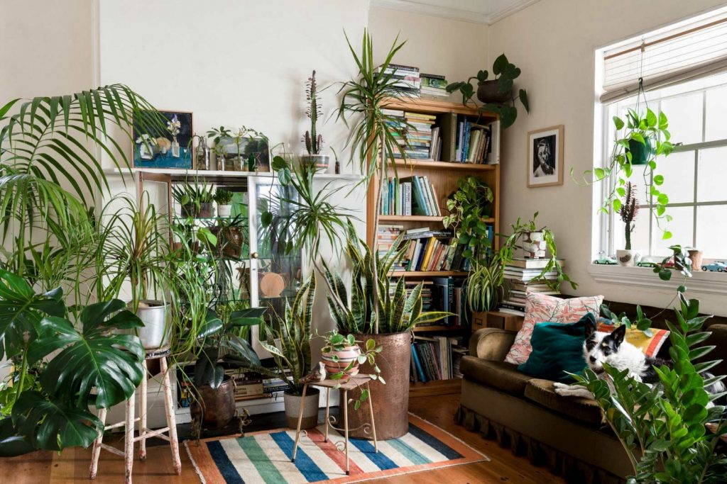 îngrijirea plantelor