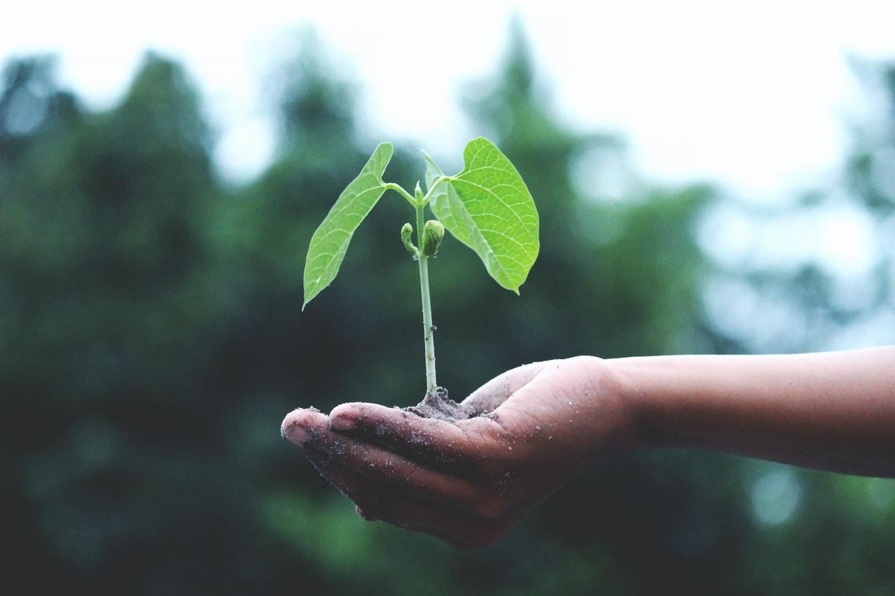 educația ecologică masă rotundă